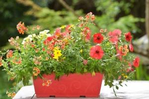 Если вы любите цветы, вы сможете отдохнуть в саду