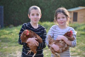 На психологических семинарах дети получают опыт ухода за домашней птицей и участвуют в сборе яиц
