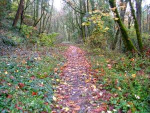 Природа оказывает восстанавливающее действие на психику и организм в целом