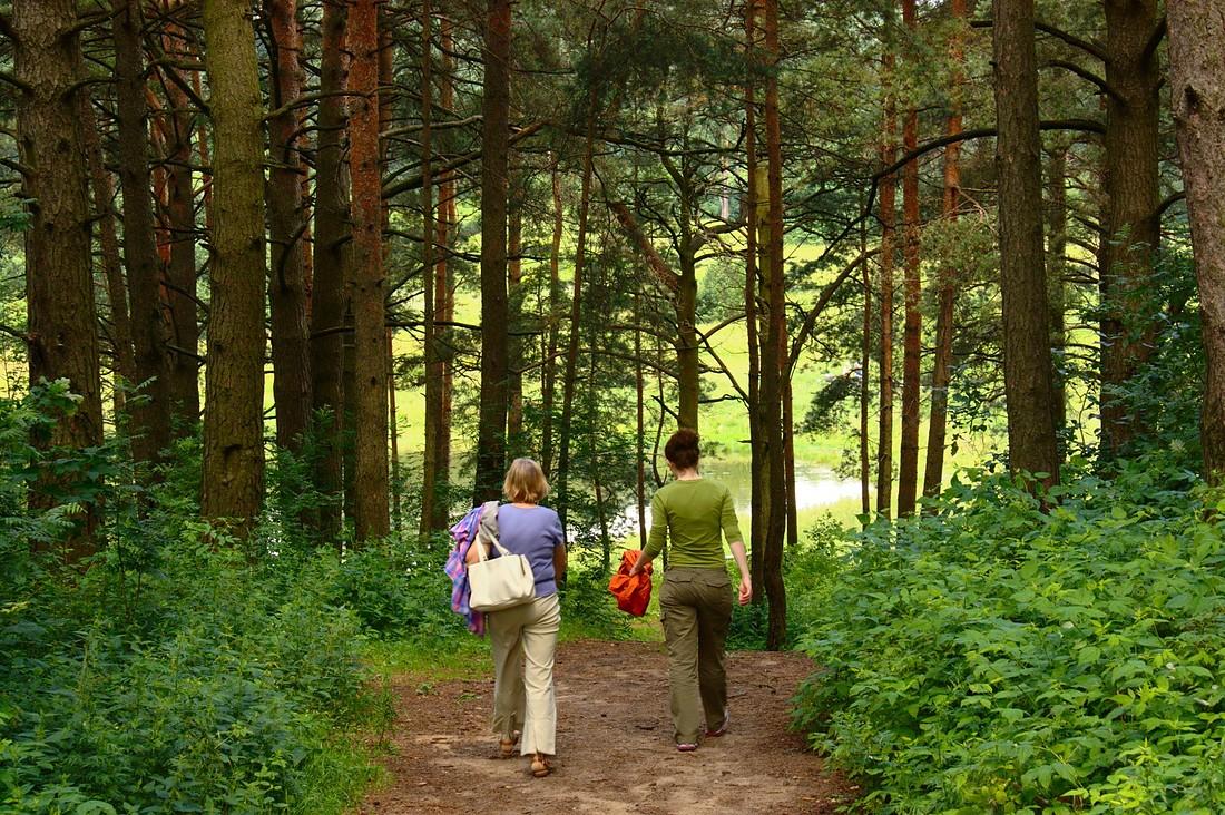 Уравновешеность и ощущение эмоционального благополучия даст простая прогулка по лесу