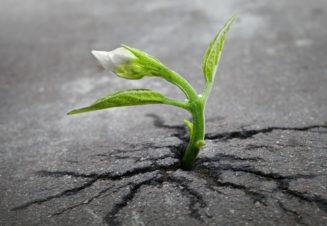 Символ сильного характера - цветок, прорастающий сквозь асфальт