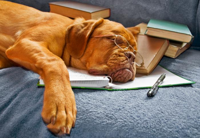 Регулярный, продолжительный и здоровый ночной сон избавит от умственной усталости