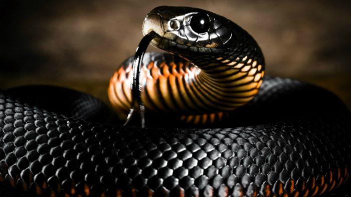 Играть в игры с токсичным человеком также чревато как с ядовитой змеей