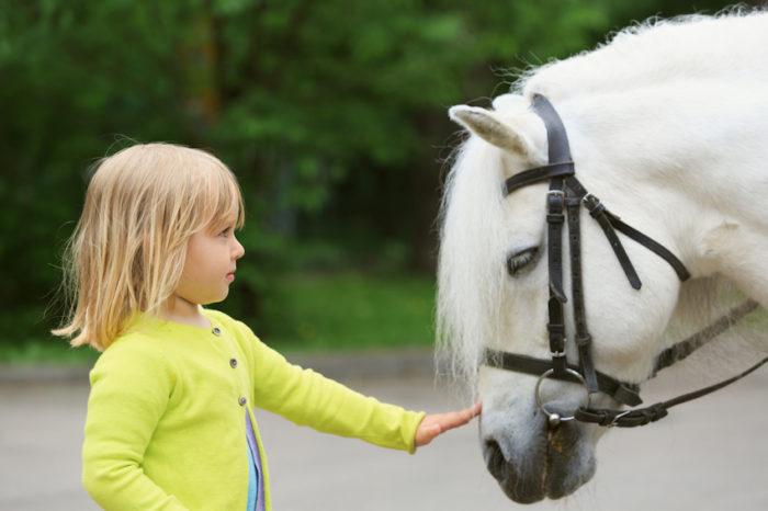 Лошадь выступает моральным наставником для человека – у нее есть чему поучиться.